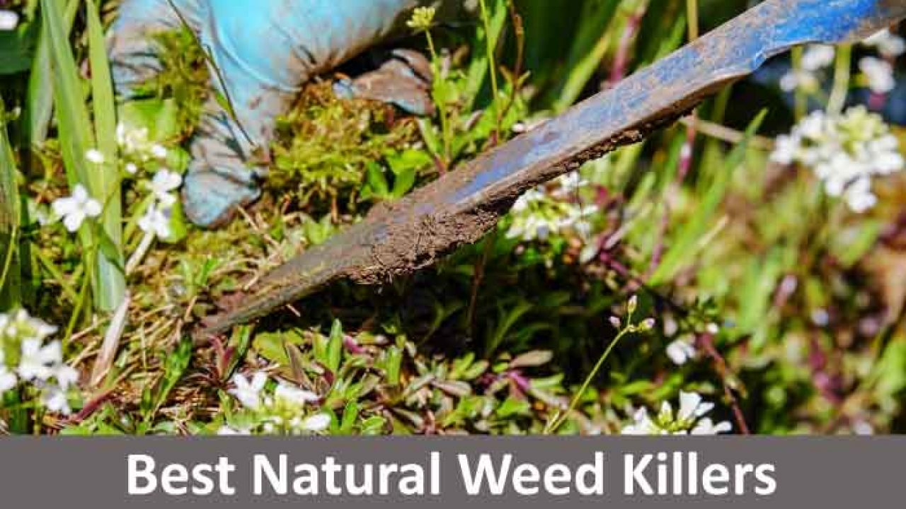 14 Natural Weed Killers to Kill Weeds Naturally in Your Garden