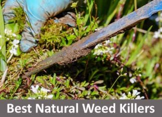 Best Natural Weed Killers