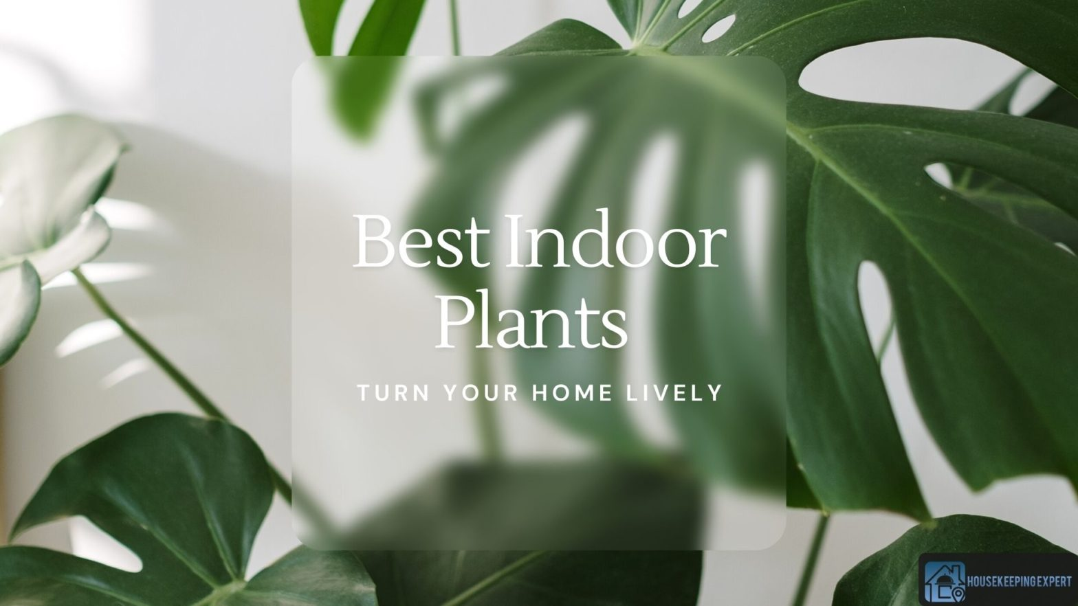 Best Indoor Plants To Turn Your Home Lively