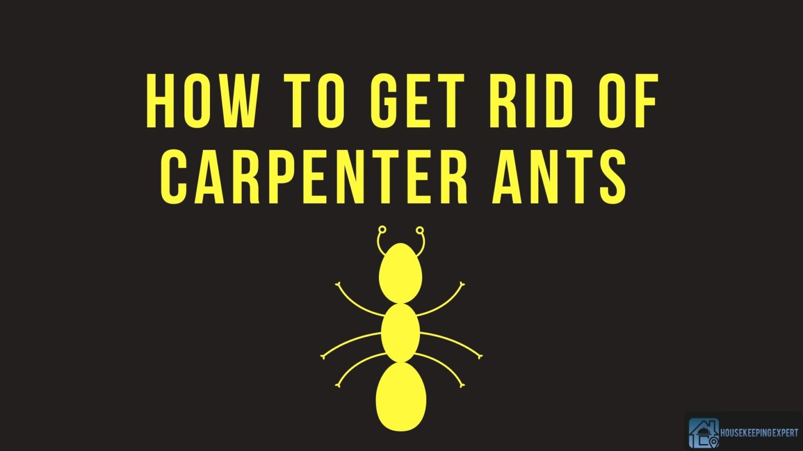 How To Get Rid Of Carpenter Ants