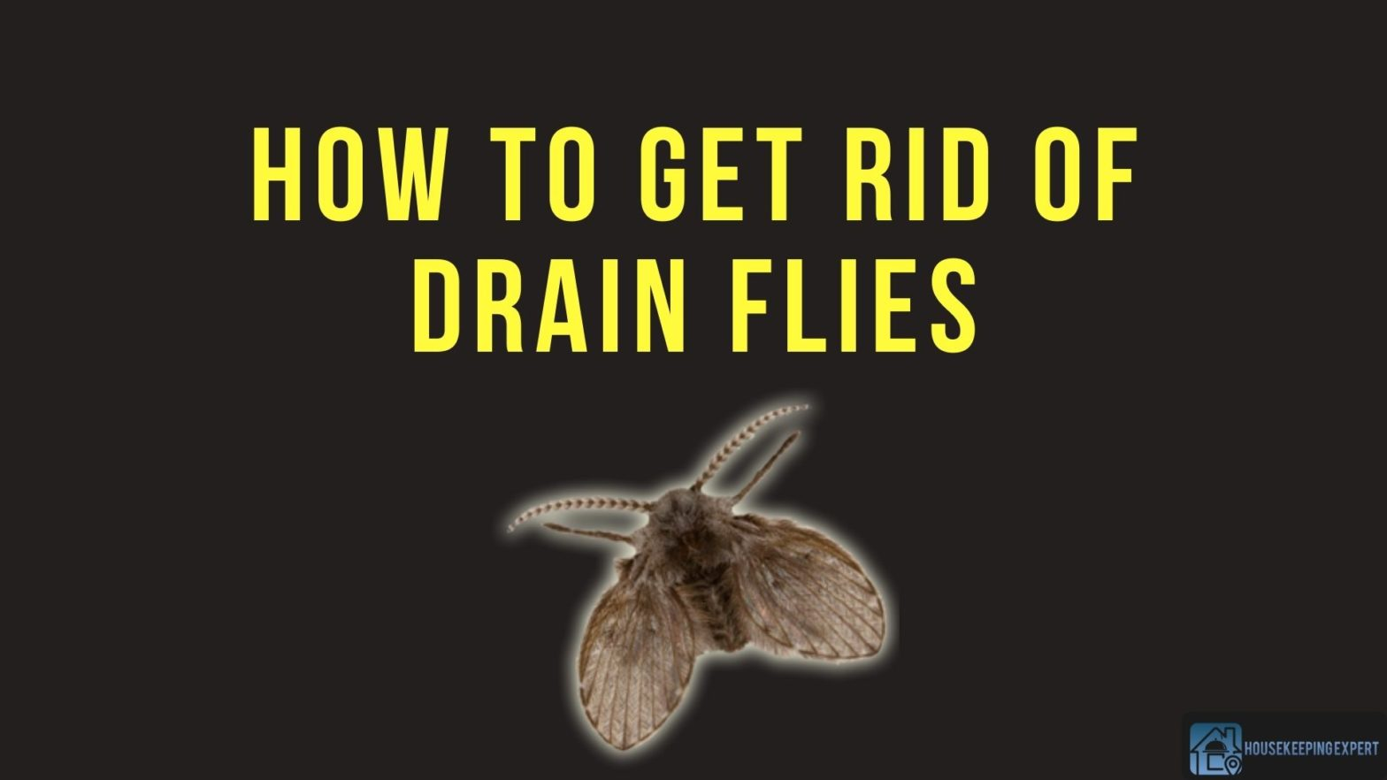 How To Get Rid Of Drain Flies